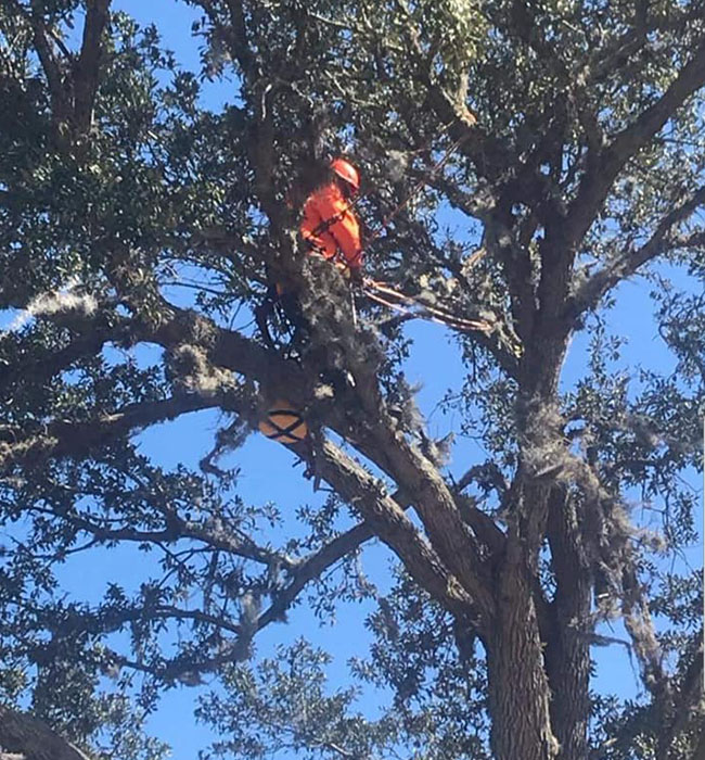 A & L Tree Service LLC Arborist Services